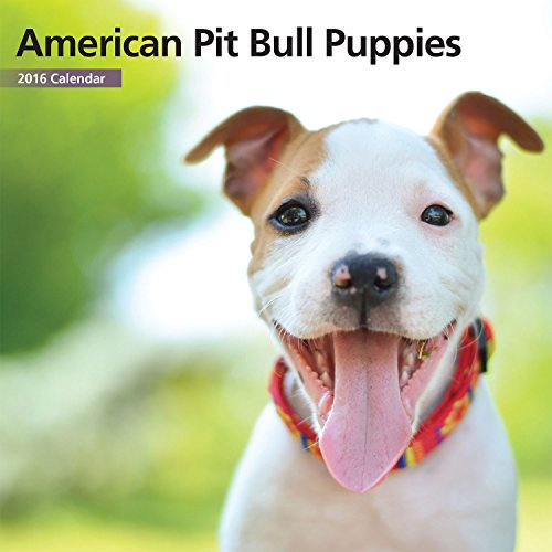 American Pit Bull Puppies Mini Calendar 12 Month 2016