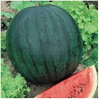 1//4 Lb Florida Giant Watermelon Seeds Everwilde Farms Mylar Seed Packet