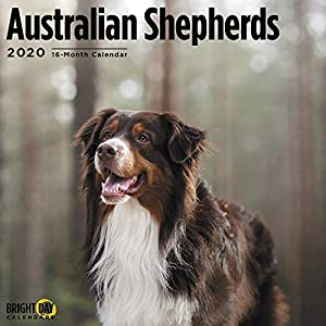 2020 Australian Shepherds Wall Calendar by Bright Day, 16 Month 12 x 12 Inch, Cute Dogs Puppy Animals Aussies Canine 10