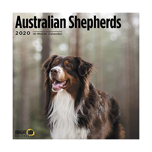 2020 Australian Shepherds Wall Calendar by Bright Day, 16 Month 12 x 12 Inch, Cute Dogs Puppy Animals Aussies Canine 1
