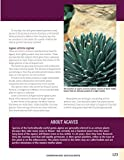 Cacti and Succulents Handbook: Basic Growing