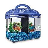 Imagitarium Betta Fish Dual Habitat Tank in Blue, 0.8 gal.