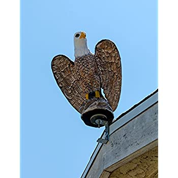 Amazon Com Eagle Bird Deterrent Decoy Life Like Scare