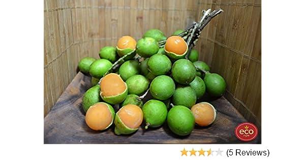 Fresh Quenepa Fruit (5lb): Amazon.com: Grocery & Gourmet Food