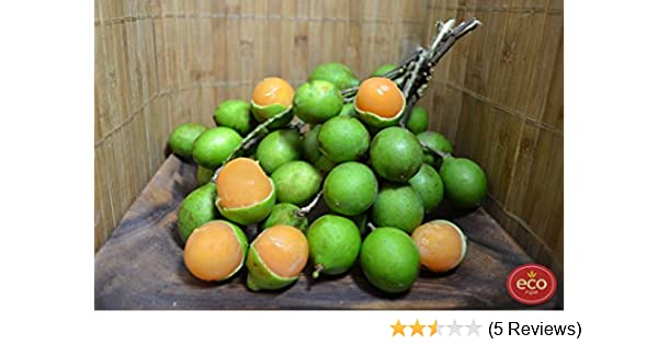 Fresh Quenepa Fruit (5lb): Amazon.com: Grocery & Gourmet Food