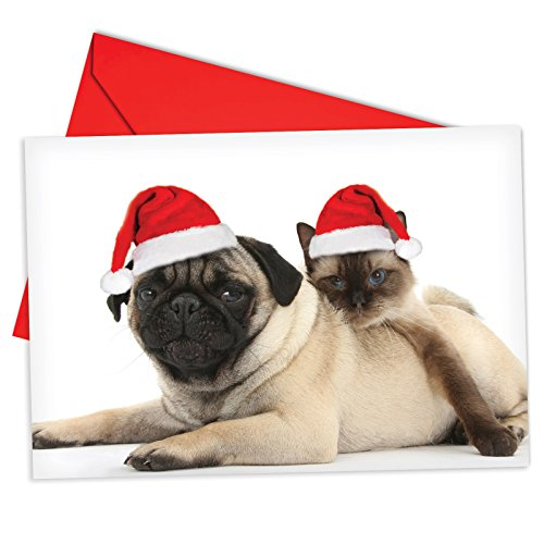 12 'Copy Cats Pug' Boxed Christmas Cards with Envelopes 4.63 x 6.75 inch, Funny Puppy and Kitty Christmas Notes, Holiday Dog and Cat Cards, Adorable Christmas Stationery B6596CXSG -