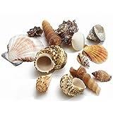 NaDeco® Muschelmix groß 1kg | Muscheln und Schnecken im mix | Deko Muscheln zum Basteln | Dekomuscheln zum Basteln & Dekorieren
