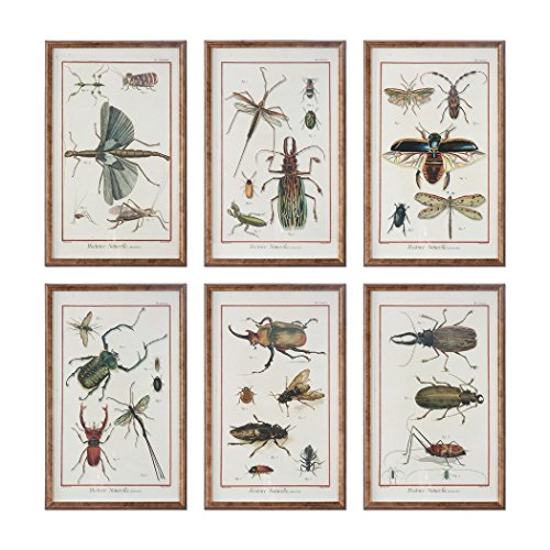 Antique Style Insect Study Print Set of 6 | Beetles Bugs Vintage Framed Art