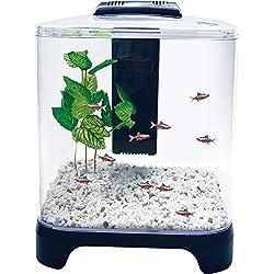 Penn Plax Betta Fish Tank Aquarium Kit With LED Light and Internal Filter Desktop Size, 1.5 Gallon