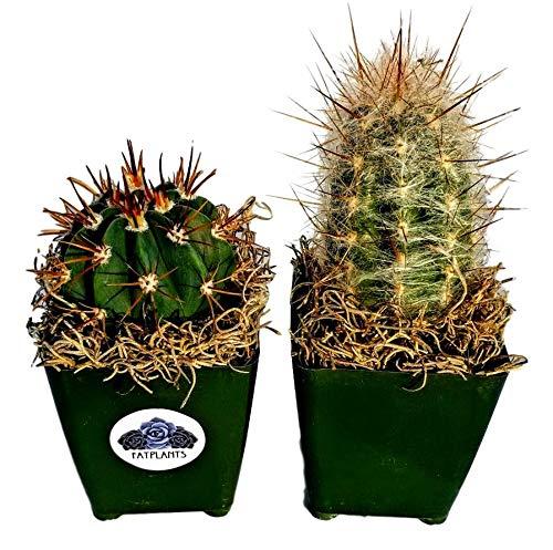 Fat Plants San Diego Large Cactus Plant(s) (2) by Fat Plants San Diego (Image #7)