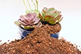 Succulent Soil Mix by Perfect Plants 4quarts- Plant All Succulent and Cactus types