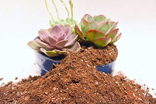 Succulent Soil Mix by Perfect Plants 4quarts- Plant All Succulent and Cactus types