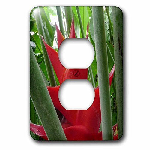 3dRose LLC lsp_89785_6 Heliconia Flower, Manoa Valley, Honolulu, Hawaii Us12 Dpb2144 Douglas Peebles 2 Plug Outlet Cover by 3dRose