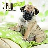 Pug Puppies 2017 Mini 7x7 (Multilingual Edition)
