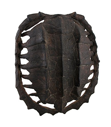 Faux Turtle Shell (Resin Wall Sculptures Dark Brown Faux Antiqued Turtle Shell Wall Mounted Sculpture 10 X 12 X 3.5 Inches Brown Model # 7465)