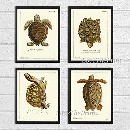 turtle-art-print-set-of-4-beautiful-antique-turtles-tortoise-reptile-desert-nature-natural-science-i