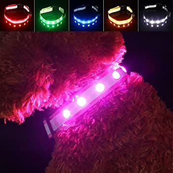 Amazon Com Pawow Usb Rechargeable Led Reflective Dog