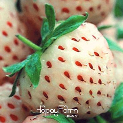 Loss Promotion100 Seed/Lot White Fresh Strawberry Seeds Planting a Garden Courtyard Green Fruits Strawberry Seed,#K5Z1K1 SVI