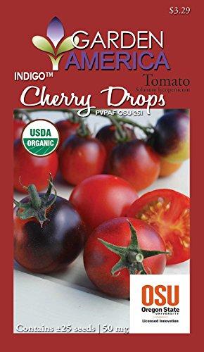 Garden America LYC-1431 Organic Indigo Cherry Drops Tomato Seed (Grafting Tomato Seeds compare prices)