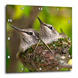 3dRose USA, California, Lakeside, Baby Hummingbirds. – Wall Clock, 10 by 10″ (dpp_205286_1) For Sale