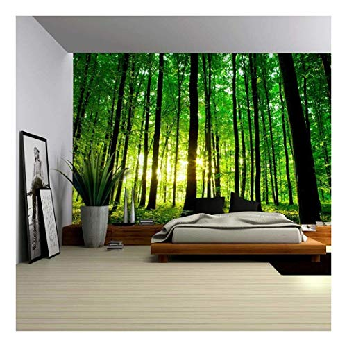 - wall26 - Sun Shining Through a Tall Tree Forest - Wall Mural, Removable Sticker, Home Decor - 100x144 inches