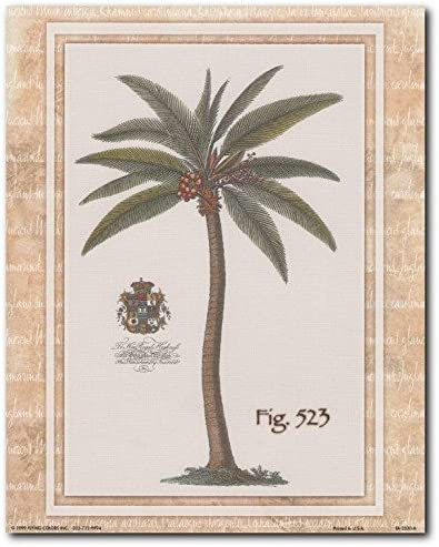 Tropical Palm Tree Vintage Fig 526 Contemporary Two Set 8x10 Wall Decor Pictures
