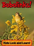Bobolinks! Learn About Bobolinks and Enjoy Colorful Pictures - Look and Learn! (50+ Photos of Bobolinks)