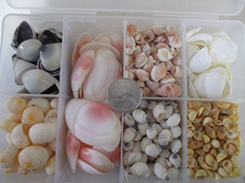 small-seashell-variety-pack-small-seashell-craft-assortment-for-making-earrings-jewelry-sailors-vale