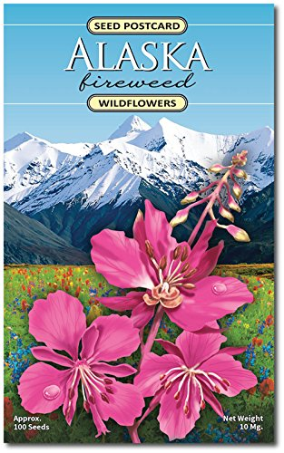 Alaska Fireweed (Epilobium Angustifolium) Wildflower Seed Packet - Enjoy The Natural Beauty of Alaska Flowers in Your Own Home Garden
