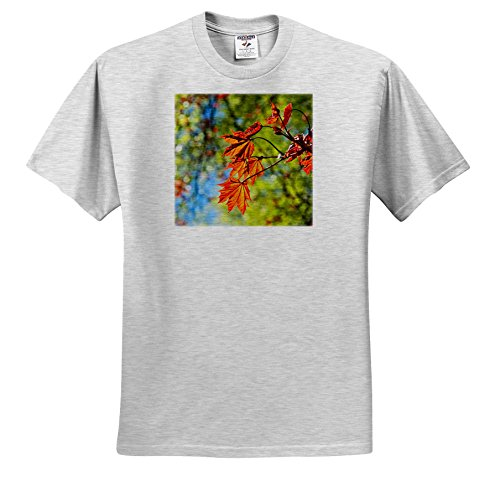 Price comparison product image 3dRose Alexis Photography - Seasons Spring - Group Of Orange Leaves Of a Schwedler Maple Tree, Soft Backdrop - T-Shirts - Youth Birch-Gray-T-Shirt XS(2-4) (TS_273733_27)