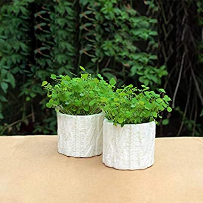 Professional Bonsai Garden Seedsplants Plants Mini Planting Long Grass Head Dolls, Chinese Vegetable Seeds - Vegetable Plants, Heirloom Plant, Seed Tree, Orchid Seeds, Gerbera Plant, Seeds Flower : Garden & Outdoor