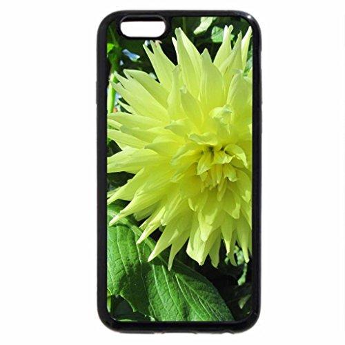 iPhone 6S / iPhone 6 Case (Black) Yellow Dahlia at the garden