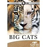 Nature: Big Cat