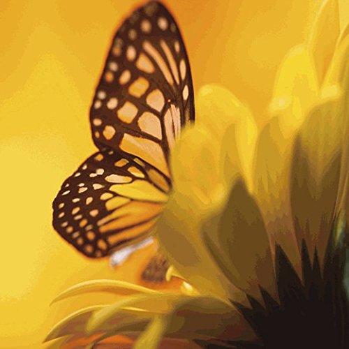 Hummingbird & Butterfly Wildlower Seed Mix - 1 Lb