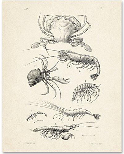 Lone Lobster (Crustaceans Crab Shrimp Artwork - 11x14 Unframed Art Print - Great Beach House Wall Decor)