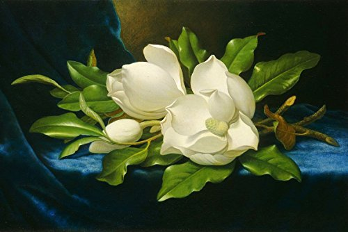 Real Hand Painted Magnolias on a blue velvet cloth Still Life Flower Floral Canvas