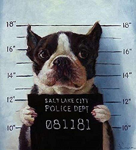 (Mug Shot Heffernan Boston Terrier Dogs Pets Jail Animals Funny Print Poster 10x10 (Image)11x14 (Overall paper) )