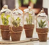 8.5 Herb Pot Cloche - 2 count - Assorted Plants - Home Decor