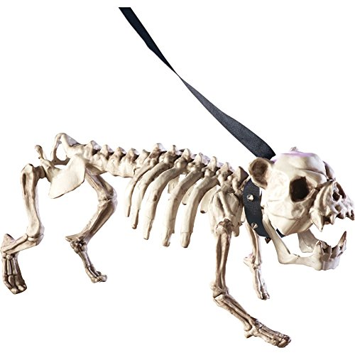 Posable Skeleton Dog Halloween Decoration, White (Scary Outdoor Halloween Decorations)