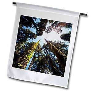 Danita Delimont–árboles–Redwood National Park, California. USA. Giant redwood árboles.–Banderas
