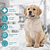 Small Dog Flea and Tick Collar,8-Month Flea and
