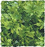 Zoo Med Naturalistic Bush Plant Australian...