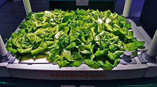 51eIwwyk3lL - OPCOM® Farm GrowBox (High Capacity, Hydroponics, indoor garden & farm, greenhouse,Growing herb, vegetable, flower, fruit)