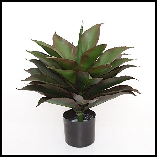 Windowbox 24in. Broad Leaf Agave in Weighted Base, Outdoor Rated
