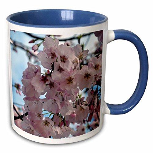 3dRose ET Photography - Flowers - Yoshino Cherry Blossoms A Georgia flowering tree in the spring - 15oz Two-Tone Blue Mug - Yoshino Flowering