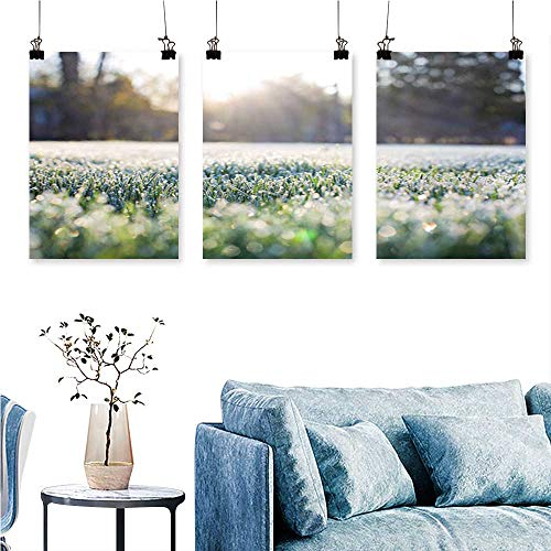 SCOCICI1588 3 Panels Triptych Frost Grass Background for Home Modern Decoration No Frame 16 INCH X 30 INCH X 3PCS