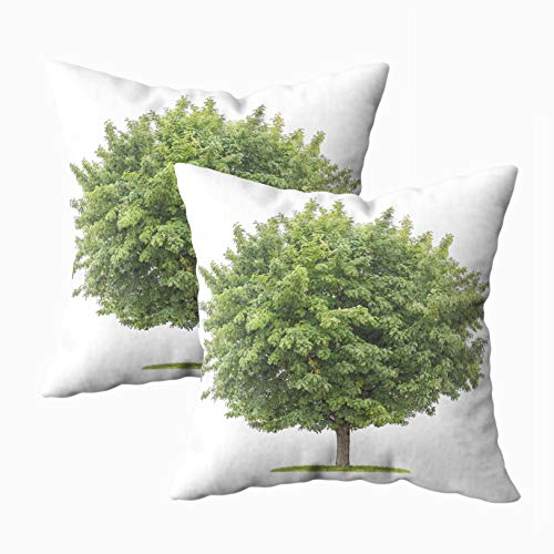 Solitaire White Fruit - Yecationy Throw Pillows, Square Lumbar Pillow Cover Isolated Service Tree Fruits White Background Home Decorative Pillow Covers 18X18 Pillow Cases,2PCS