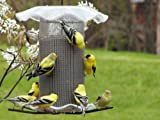 Birds Choice 3 qt. Forever Nyjer Feeder Clear Color
