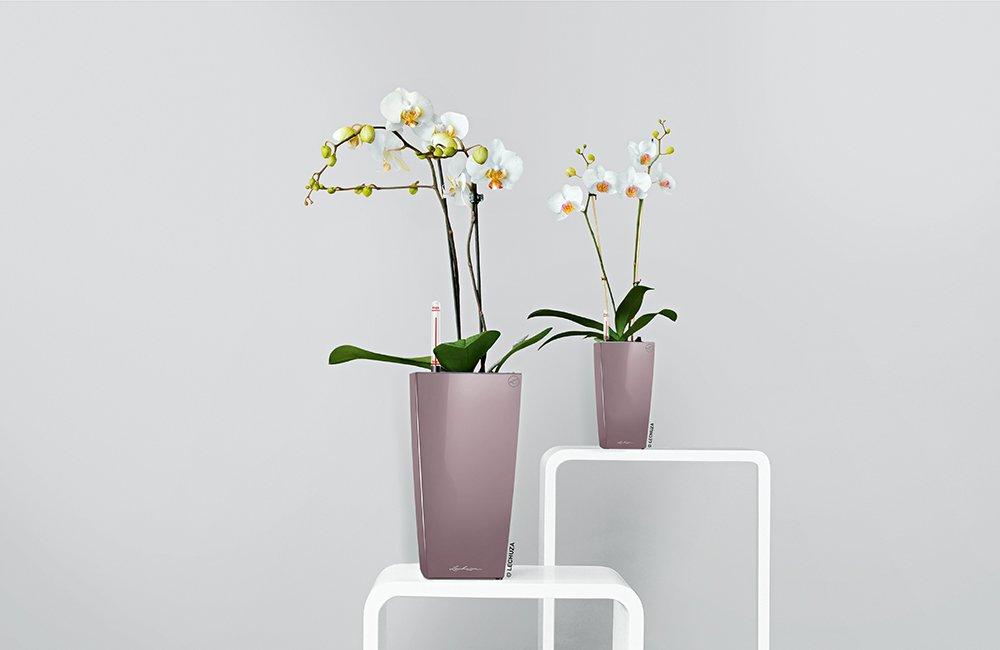 Lechuza Premium Maxi Cubico 14cm High Gloss Charcoal Self Watering Houseplant & Herb Planter Pot Lechuza UK 18053