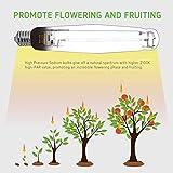 VIVOSUN Hydroponic Two Pack of 1000 Watt Flowering